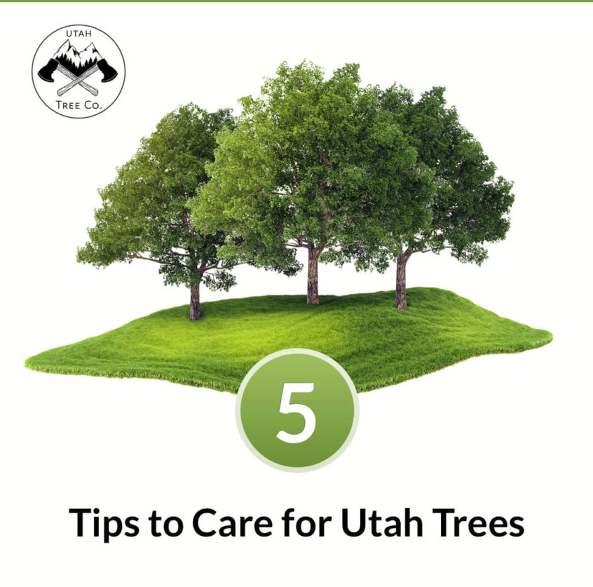 Tree care tips in Utah