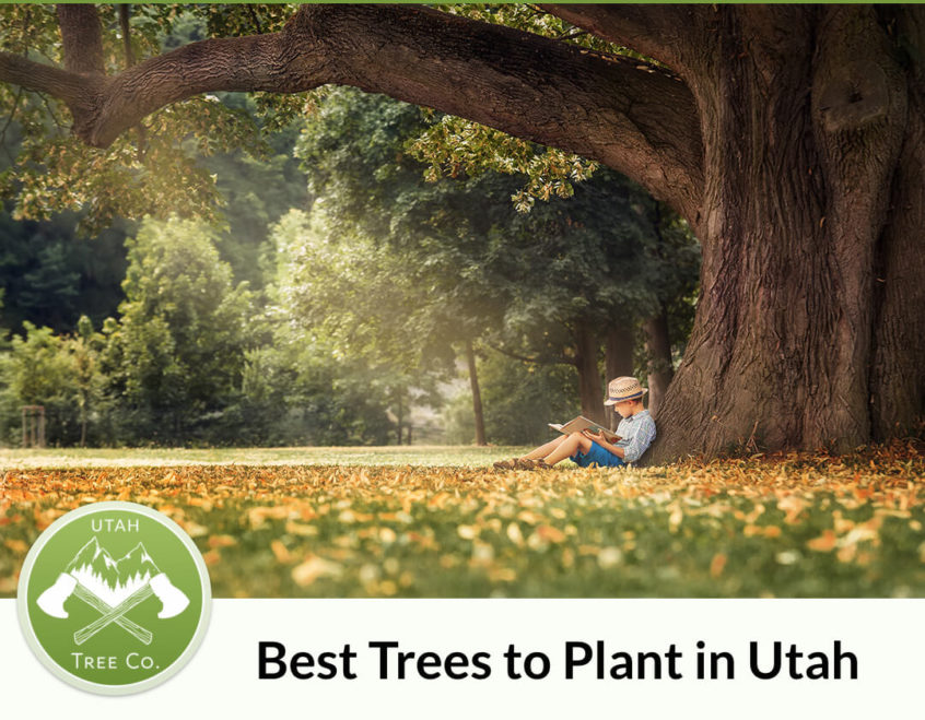 Best Trees to plant in Utah Guide