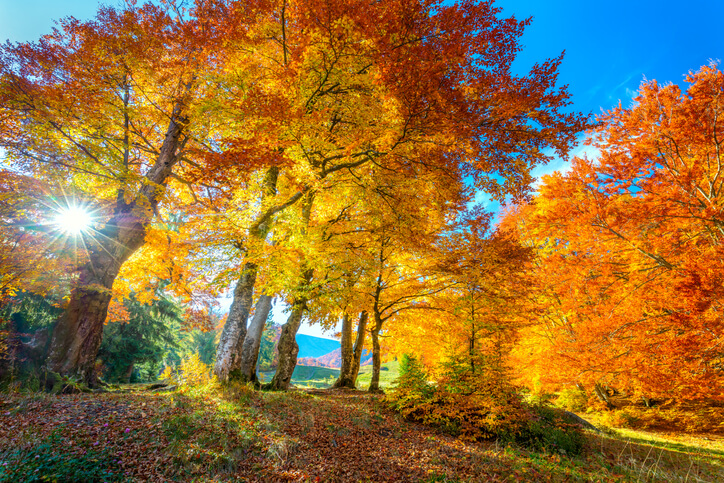 """Featured image for """"Summer Tree Care vs Fall Tree Care in Utah"""""""